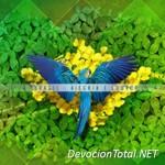 [CMC] RBC Ministerios – Brasil: Alegria e Louvor