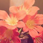 24 de Mayo – Formal