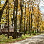 26 de Septiembre – Camino